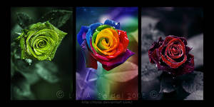 Magical Roses Triptych