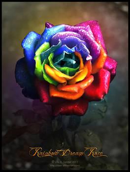 Rainbow Dream Rose