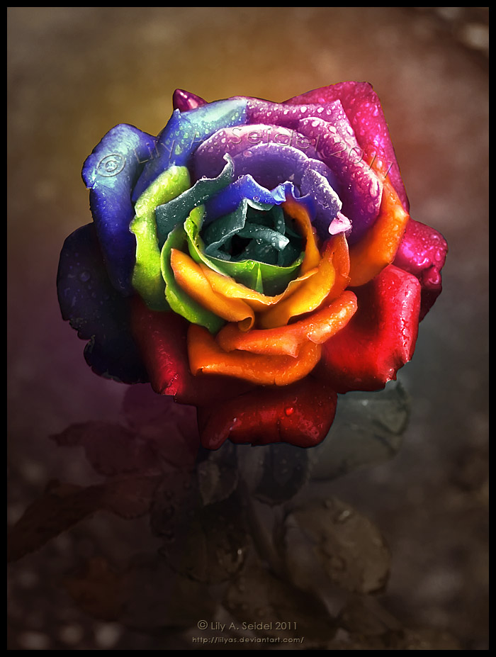 Rainbow Dream Rose II