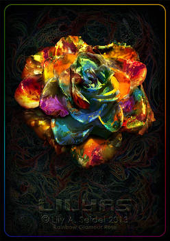 Rainbow Glamour Rose