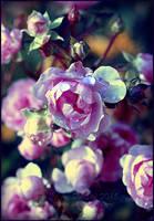 November Roses by Lilyas