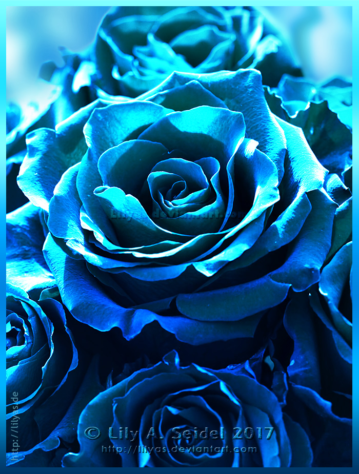 Turquoise Passion by Lilyas