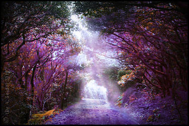 Magical Forest - FREE Premade Background by Lilyas