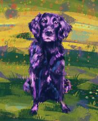 Dog portrait by pollomostro