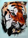 Tiger (Color pencil Drawing)
