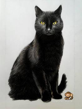 Cat (Color Pencil Drawing)