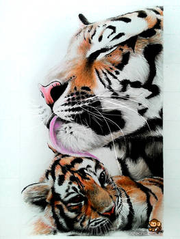 Tiger and Cub (Color Pencil Drawing)