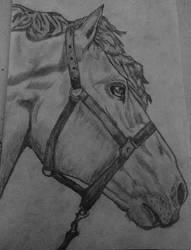 Horse :D by IIAnnaBananaII