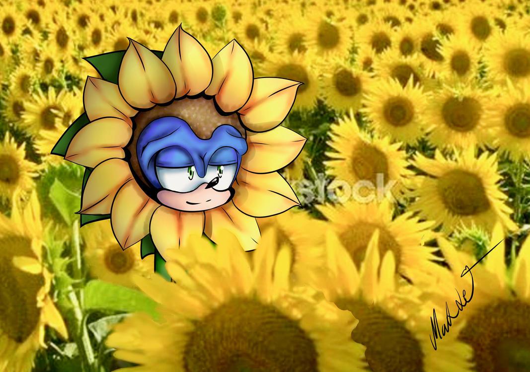 sonic in a sunflower field by mangamaddee