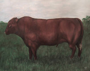 Redpoll bull by EnigmaticElocution