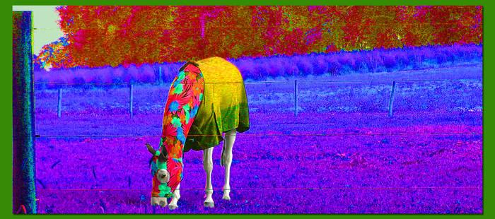 Equestrian Synesthesia
