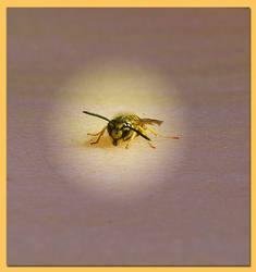 Biene - Zu nahe