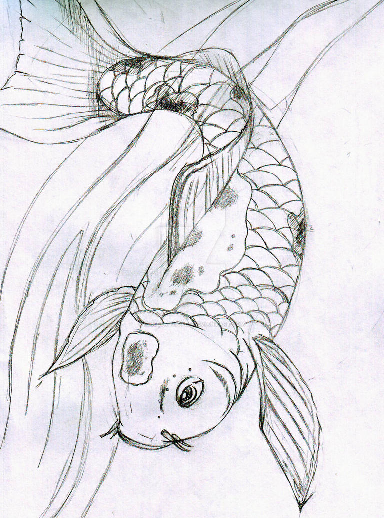 image gallery koi fish sketches