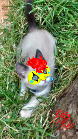 My cat as Party Poison by SadBLACKsheep
