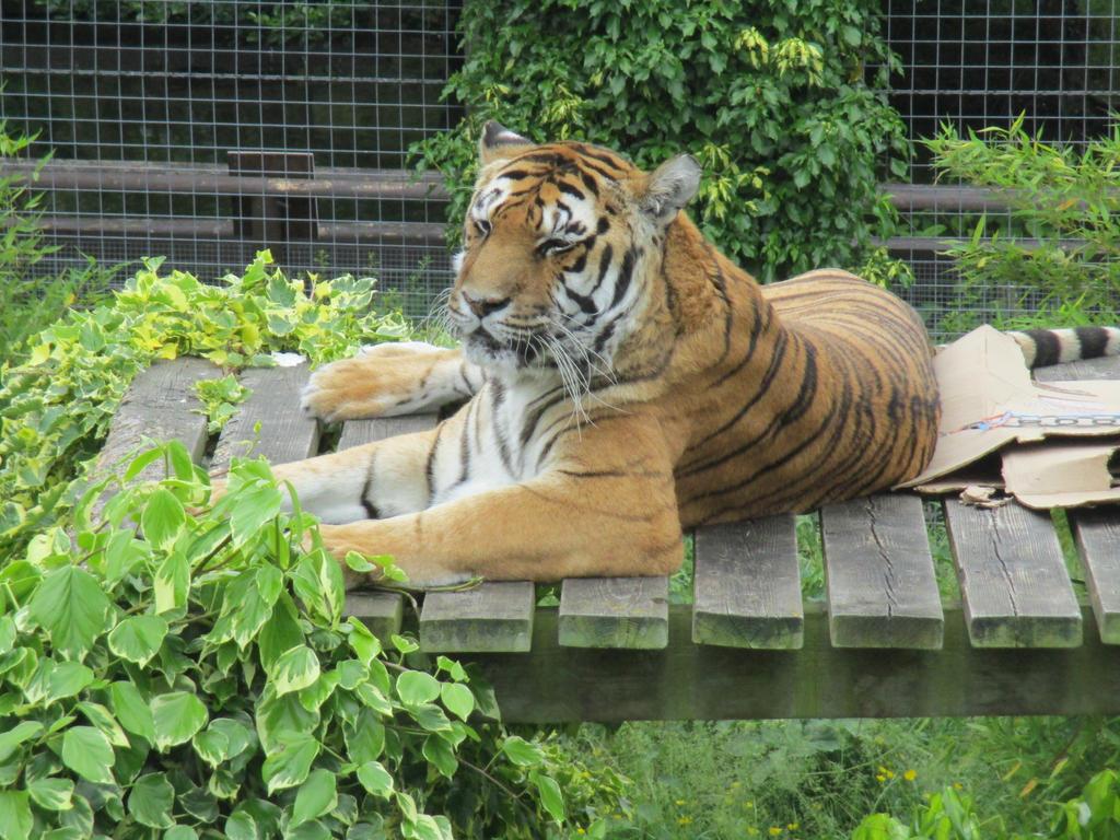 Amba, Shepreth Wildlife Park by ThornyEnglishRose