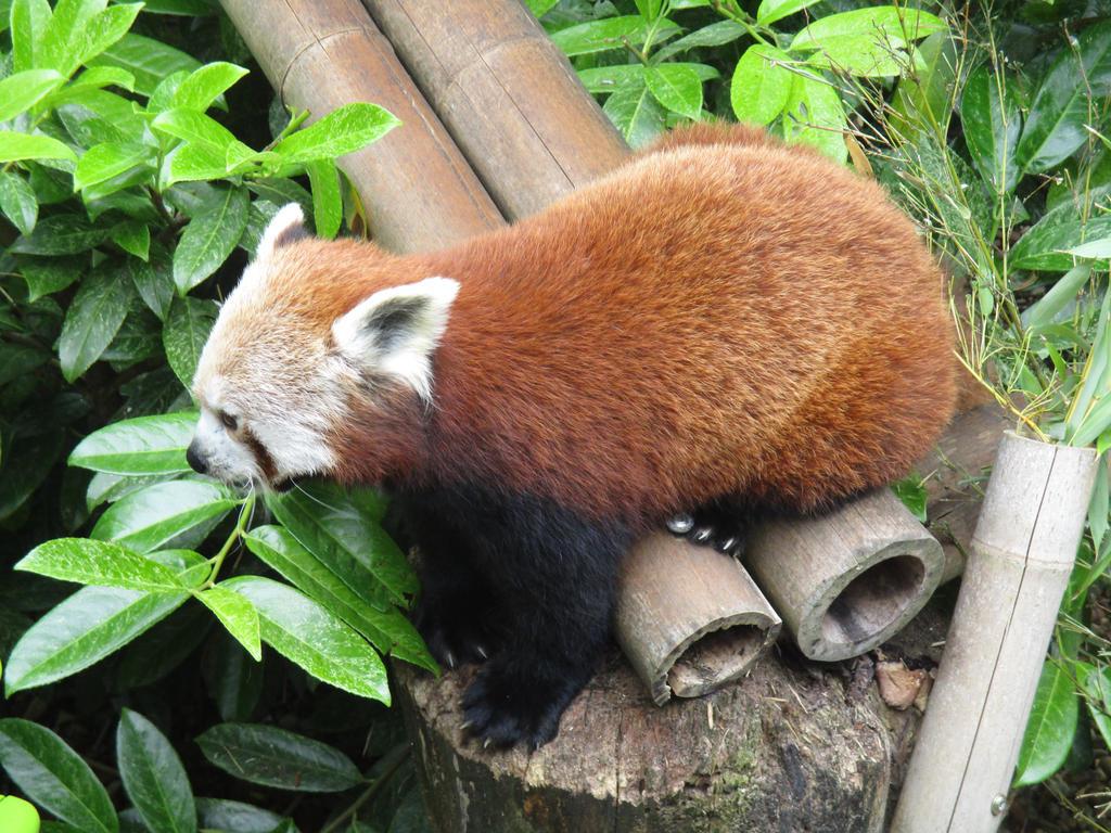 Zara, Shepreth Wildlife Park by ThornyEnglishRose