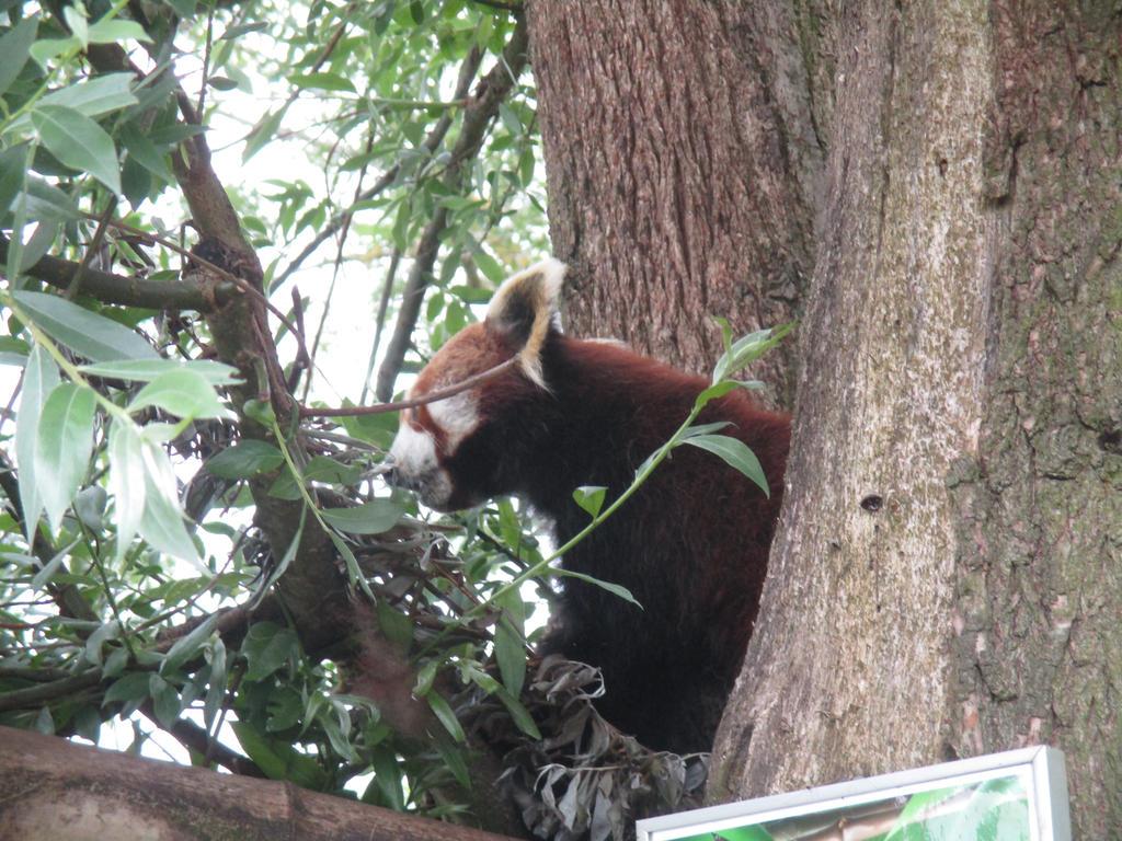 Amber, Shepreth Wildlife Park by ThornyEnglishRose