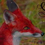 Sin's Fox Mannip by Jiel