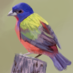 SALE :: Painted Bunting Tag for FP by Jiel