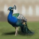 Peacock OOAK 4 SALE - $5/600points by Jiel