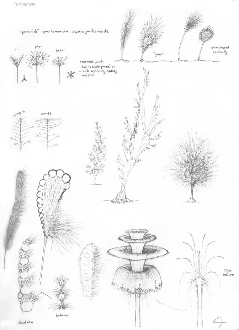 Research study about plants
