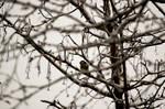 Bird on a snowy tree