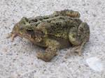 Frog03 by restmlinstock