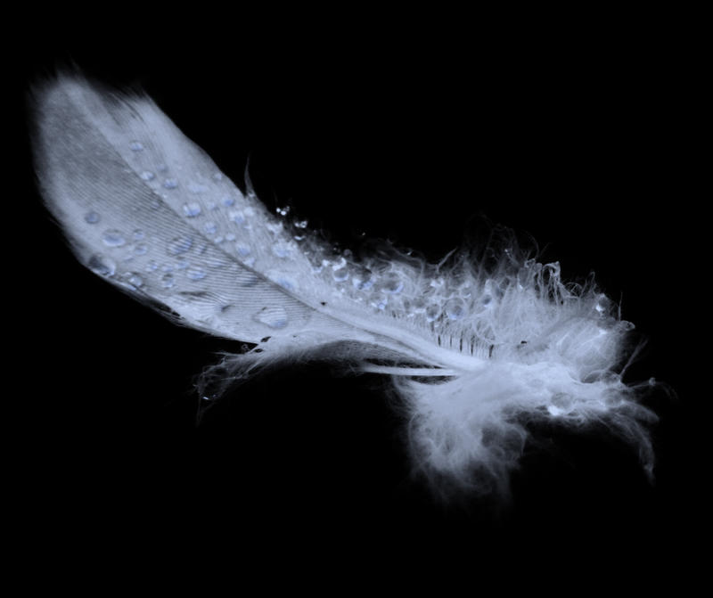 Just a feather by Alissia666