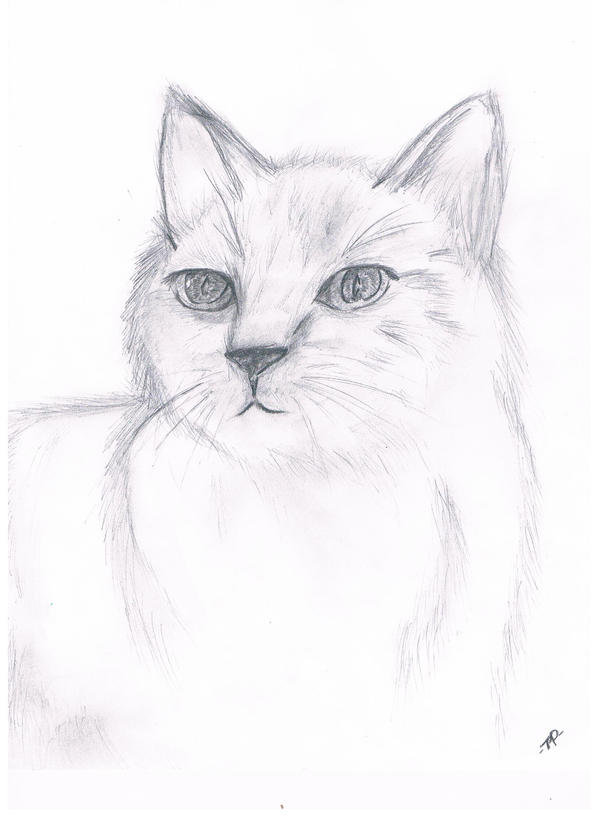 My Cat, Luu