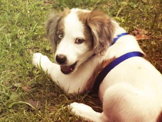 Marceline the Puppy Queen