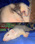 Sleeping by Nadetha