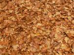 red leaves by MarcinKonieczny
