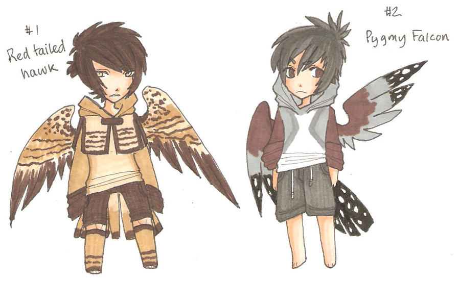 Red Tailed Hawk and Pygmy Falcon by MarshmallowCream