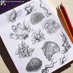Sketches of corals