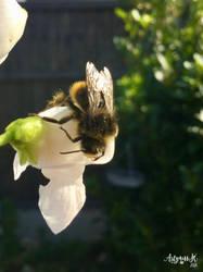 Sleepy Bee On A Bean Flower by ArtyMissK