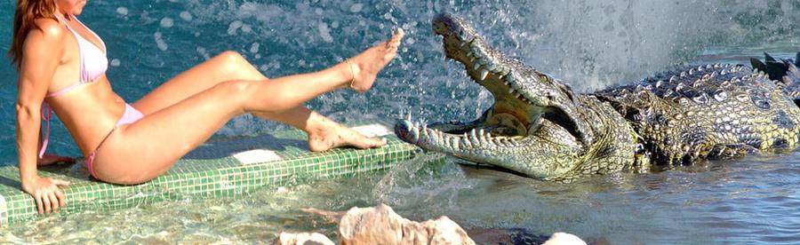 Alligator tease 01 by eylk341