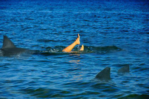 Shark! by eylk341