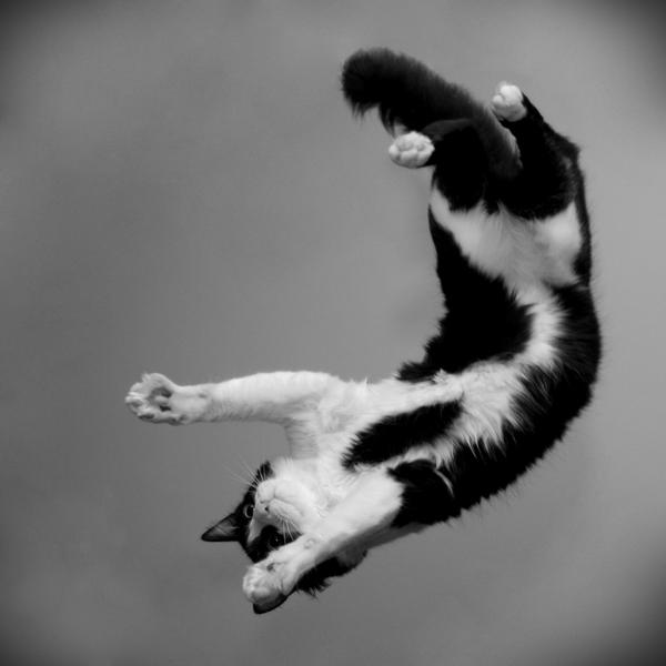 my flying cat 2 by o-a-c