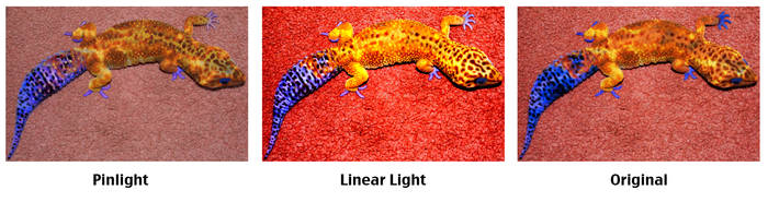 Gecko Morphing Comparison by AidenRocker18