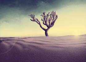 A Desert Odyssey by TahaAlasari