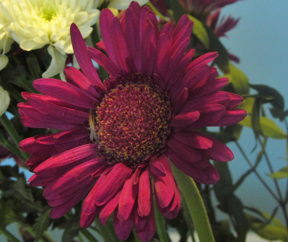flower by carpman99