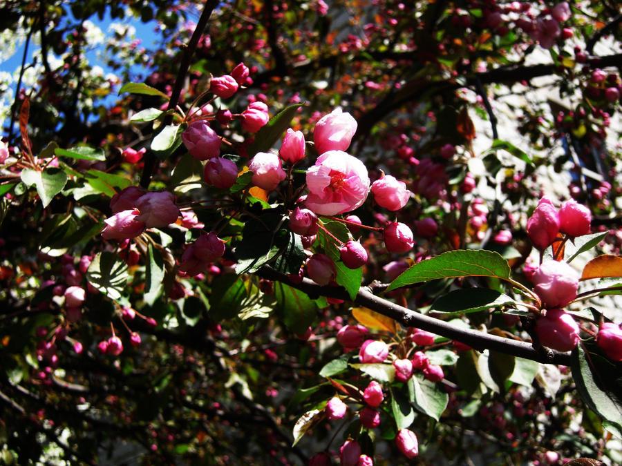Spring Budding Flowers wallpaper > Spring Budding Flowers Papel de parede > Spring Budding Flowers Fondos