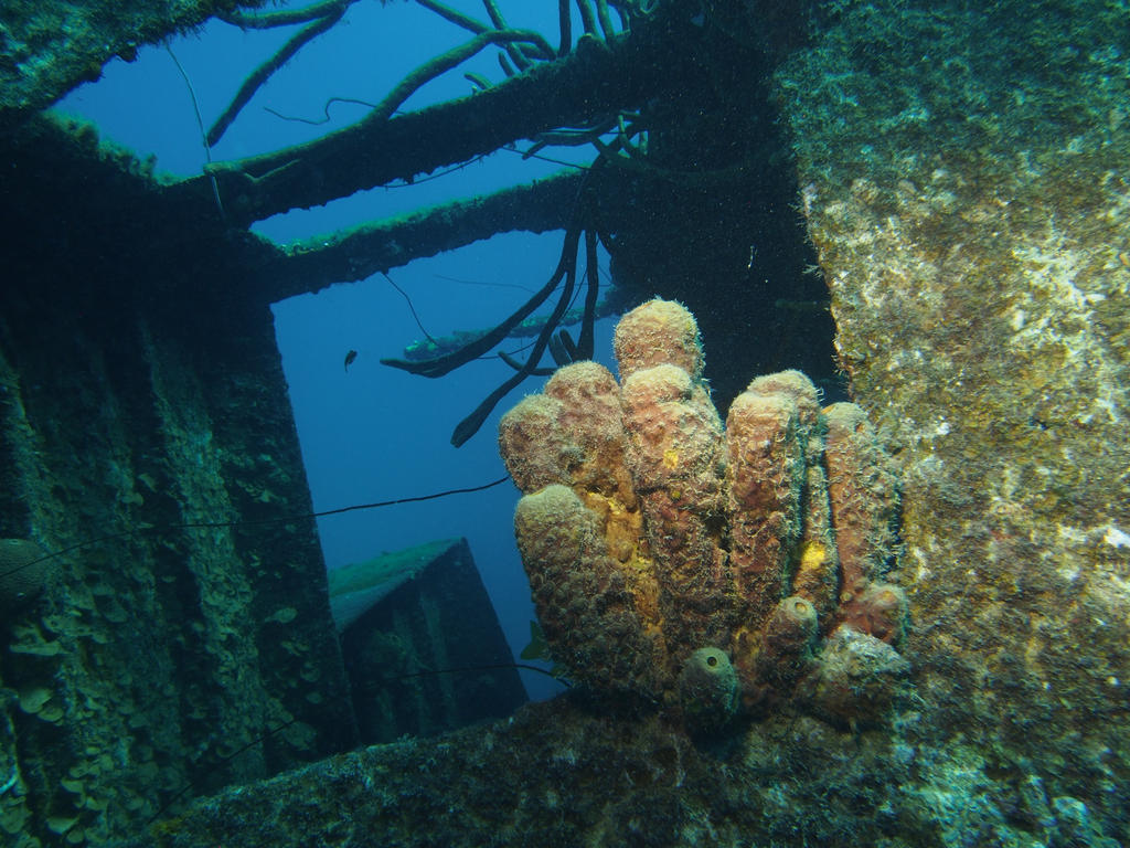 Sponge on Wreck by Meagharan