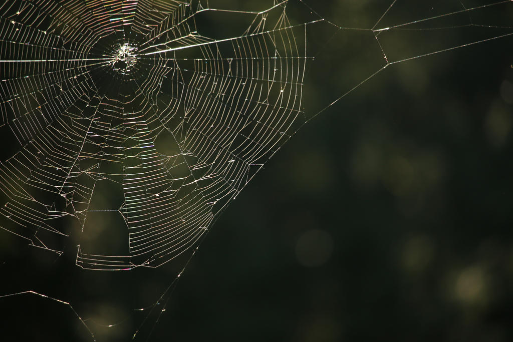 Spiderweb in the sun by Meagharan