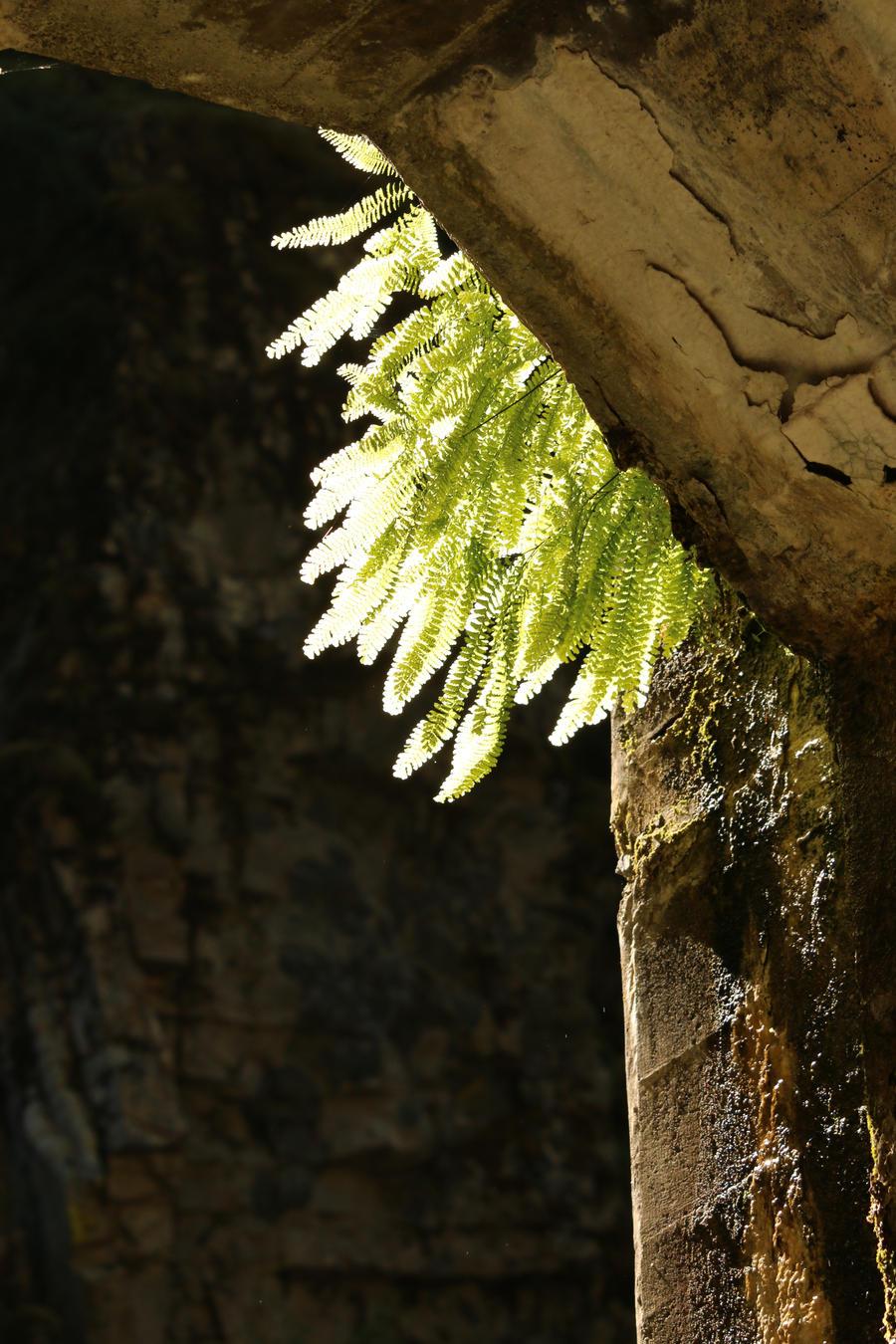 Backlit ferns by Meagharan