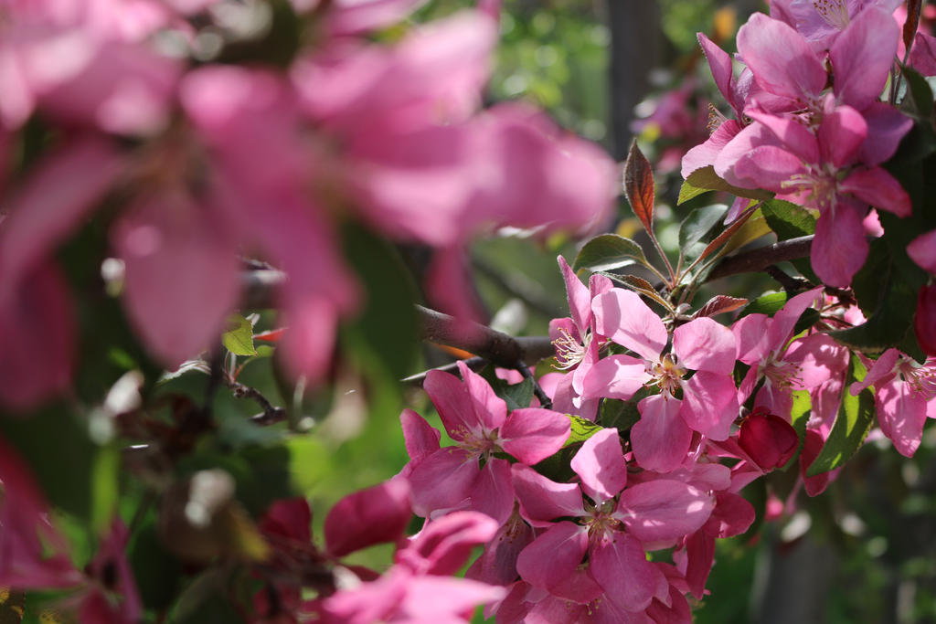 Pink flowers with depth by Meagharan
