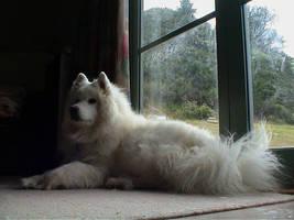 Samoyed by Lemurific