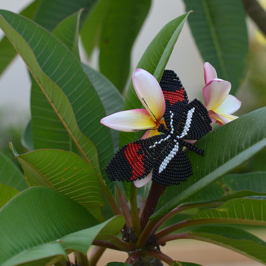 Heliconius erato phyllis by marinka-v