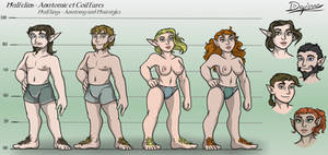 Halflings - Anatomy and hairstyles