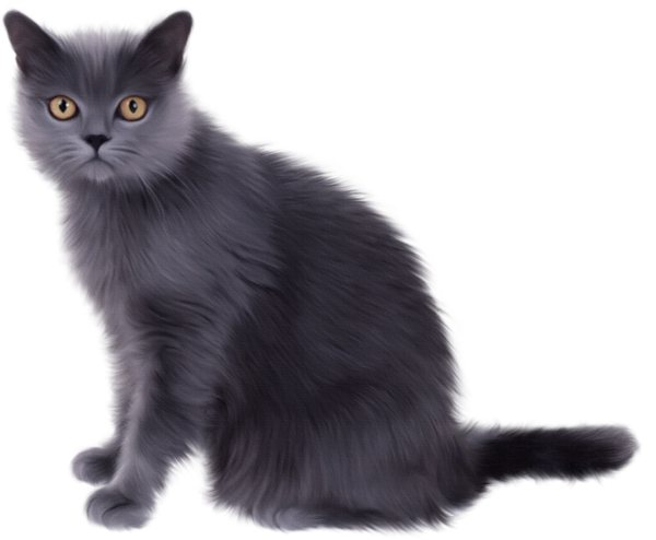 Persian Cat Black And White Clipart